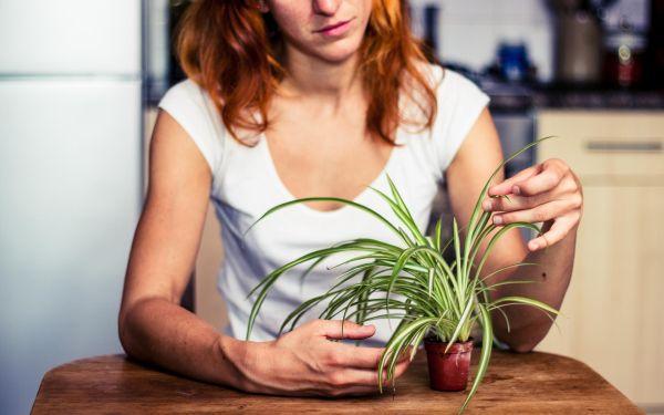 Rośliny oczyszczające powietrze: warto je mieć w domu
